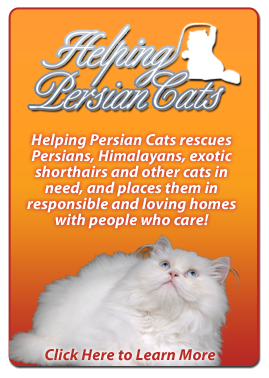 Helping Persian Cats